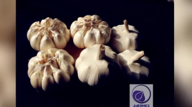 AAERMES - Quality Garlic For The World thumbnail image