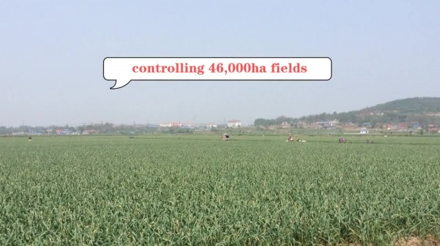Check out our garlic cultivation base in China thumbnail image