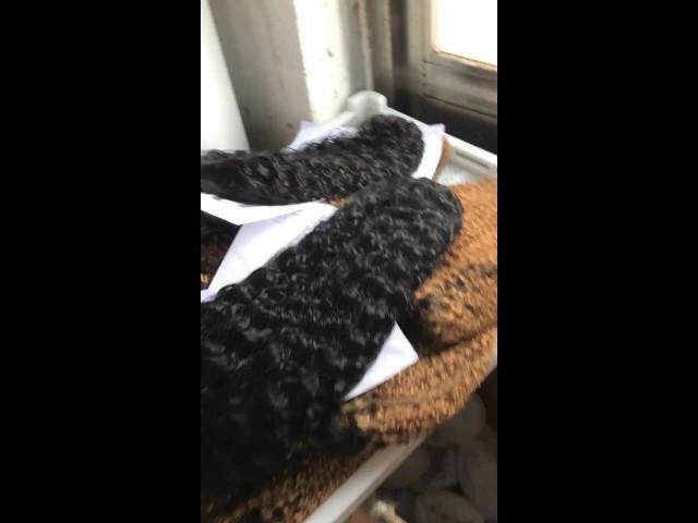 Wholesale Virgin Human Hair Wigs