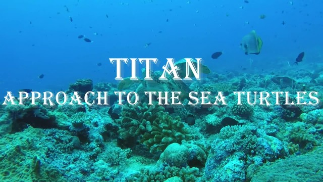 Titan underwater drone with sea turtles thumbnail image
