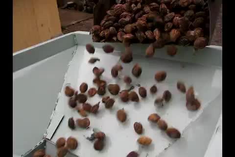 Walnut Cracking Machine thumbnail image