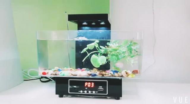 KW2013D fish tank thumbnail image