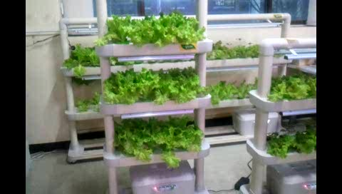 Hydroponic Cultivator thumbnail image