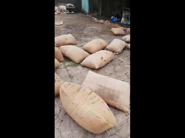 Bulk Raw cashew nuts