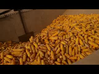 Five barrels of corn thresher video