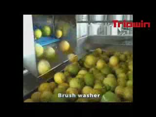 Fruit Processing Line/Machine