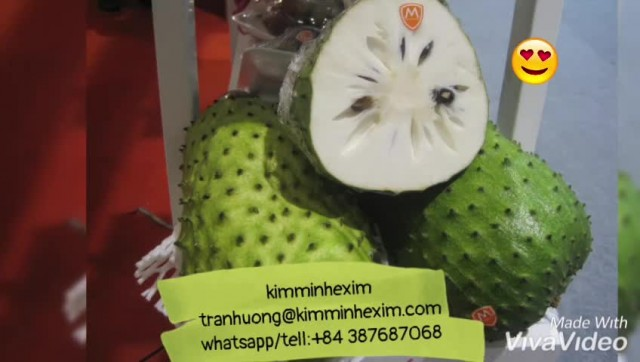 SOURSOP FRUIT WITH HIGH QUALITY thumbnail image